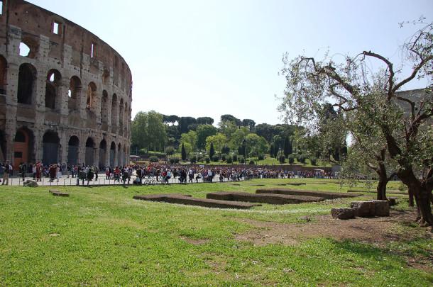 Pelouses verdoyantes près du Colisée