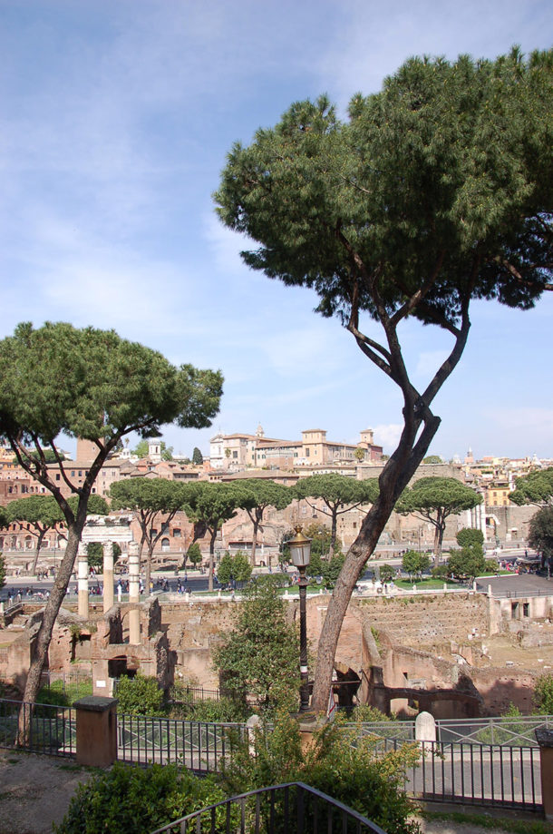 Vue sur le Forum romain