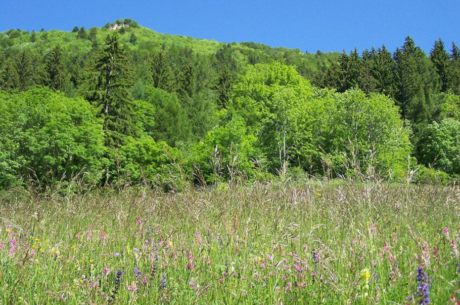 De vertes prairies avec des fleurs