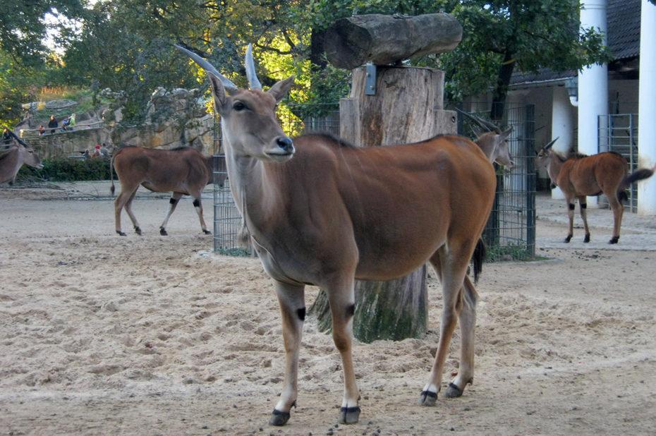 Une autre antilope