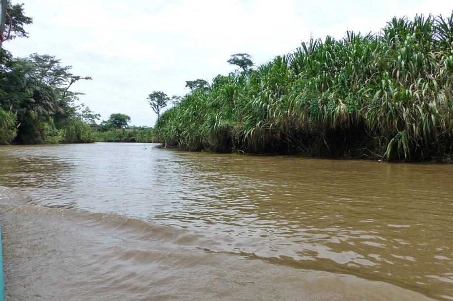 Les canales pour se rendre à Tortuguero