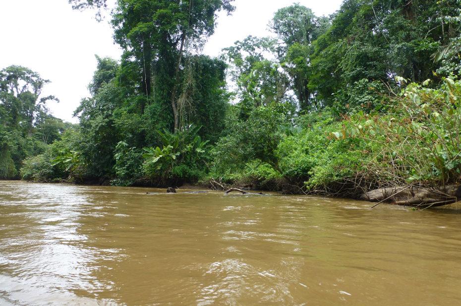 La couleur typique de l'eau dans la jungle