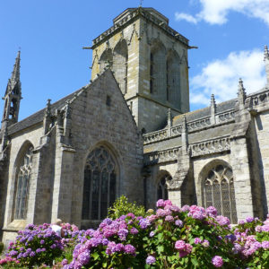 Des hortensias sur le côté de l'église de Locronan