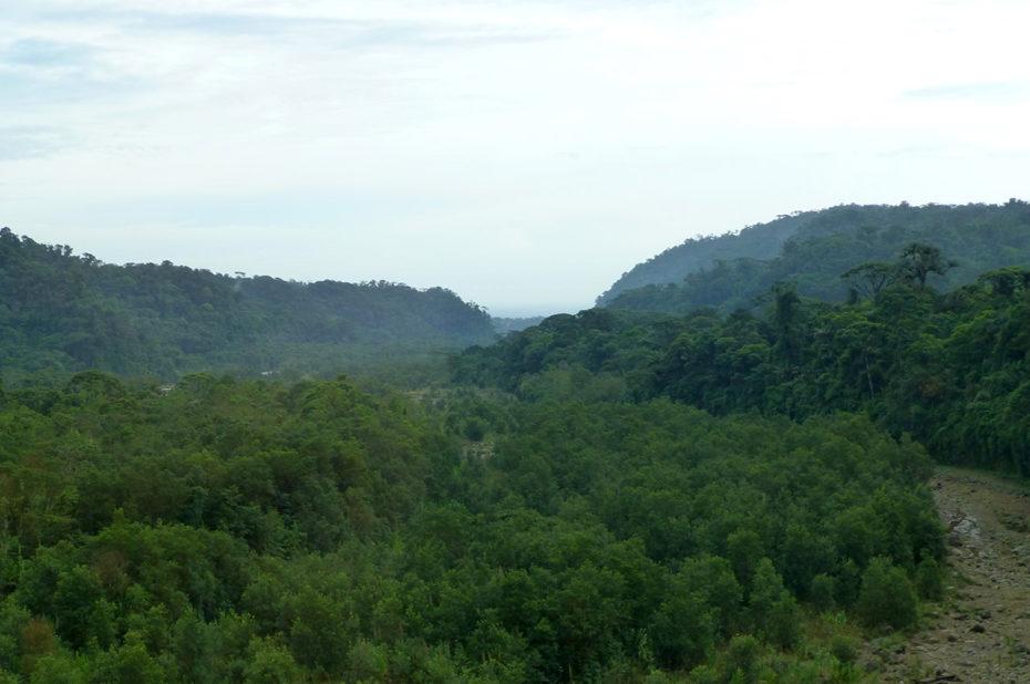 La forêt sur les hauteurs de San José