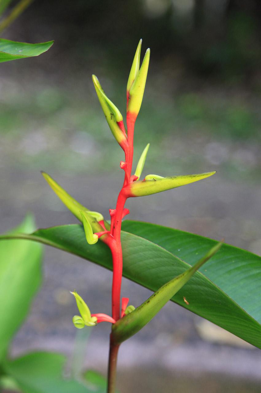 Jeune pousse dans la forêt tropicale brésilienne