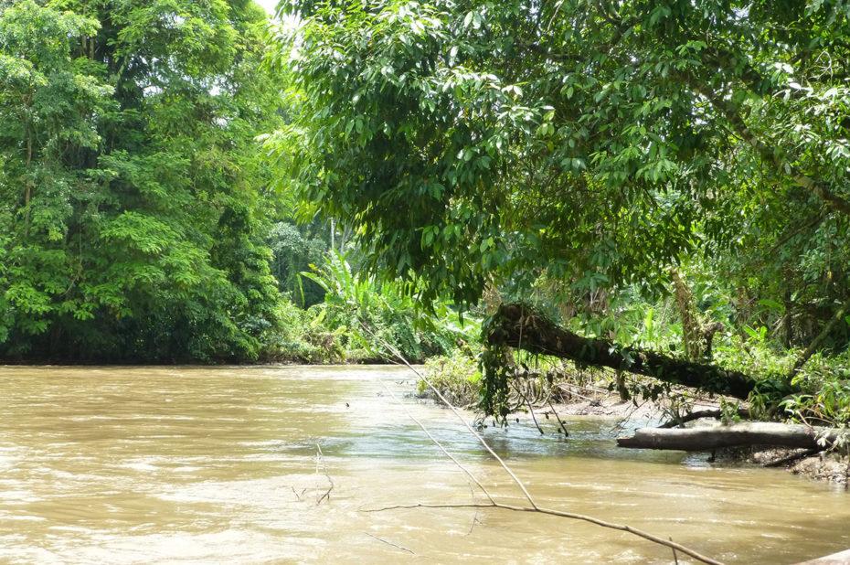 Navigation sur les canaux de Tortuguero