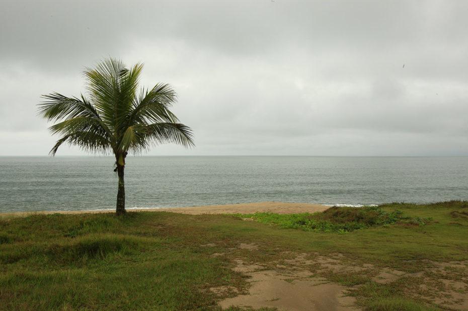 Un palmier sous un ciel menaçant