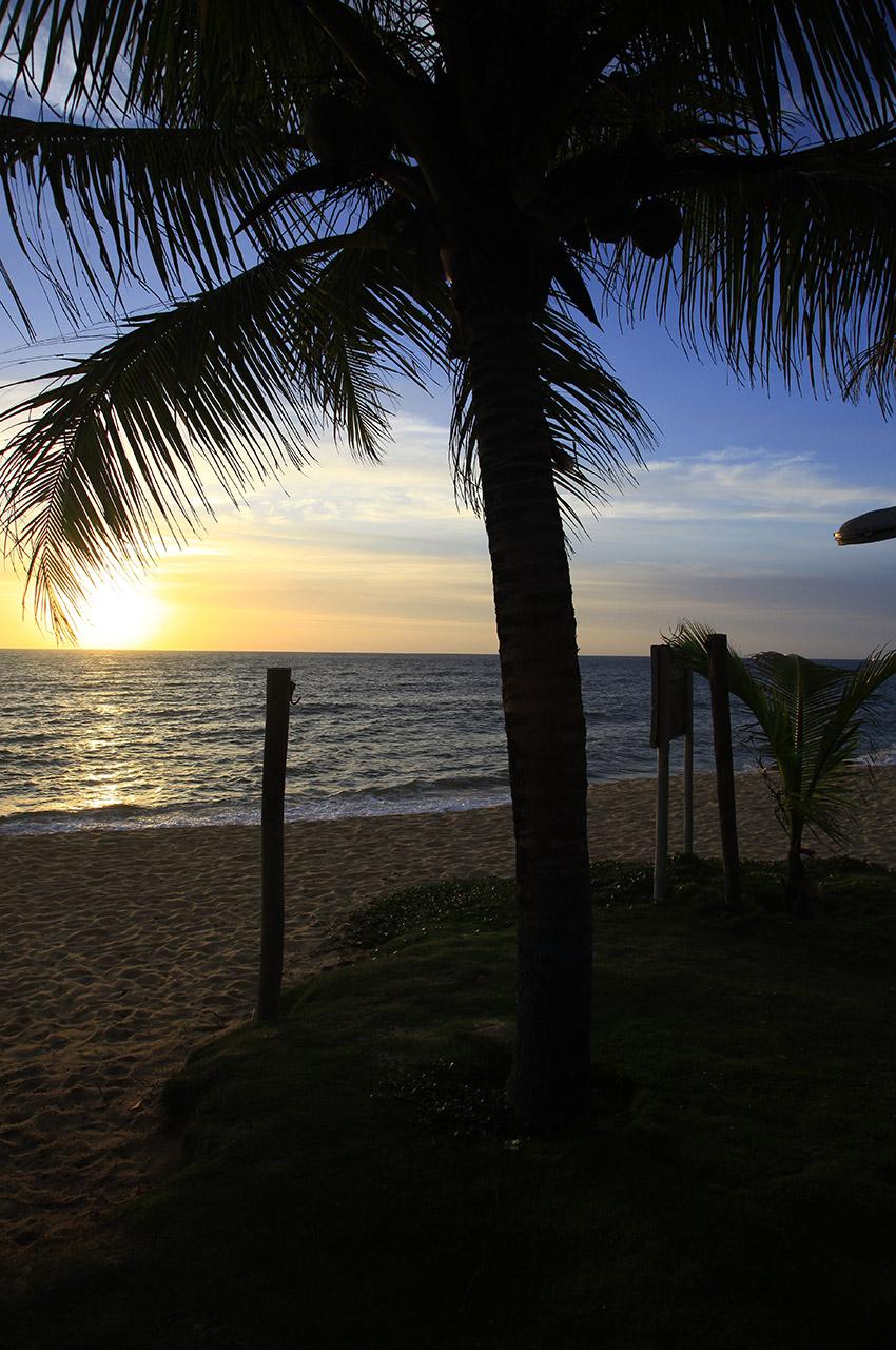 Palmier et soleil couchant sur l'océan