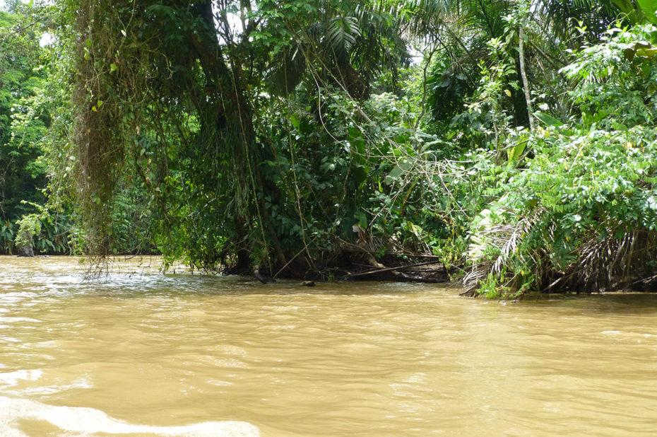 Végétation dense sur les bords du canal