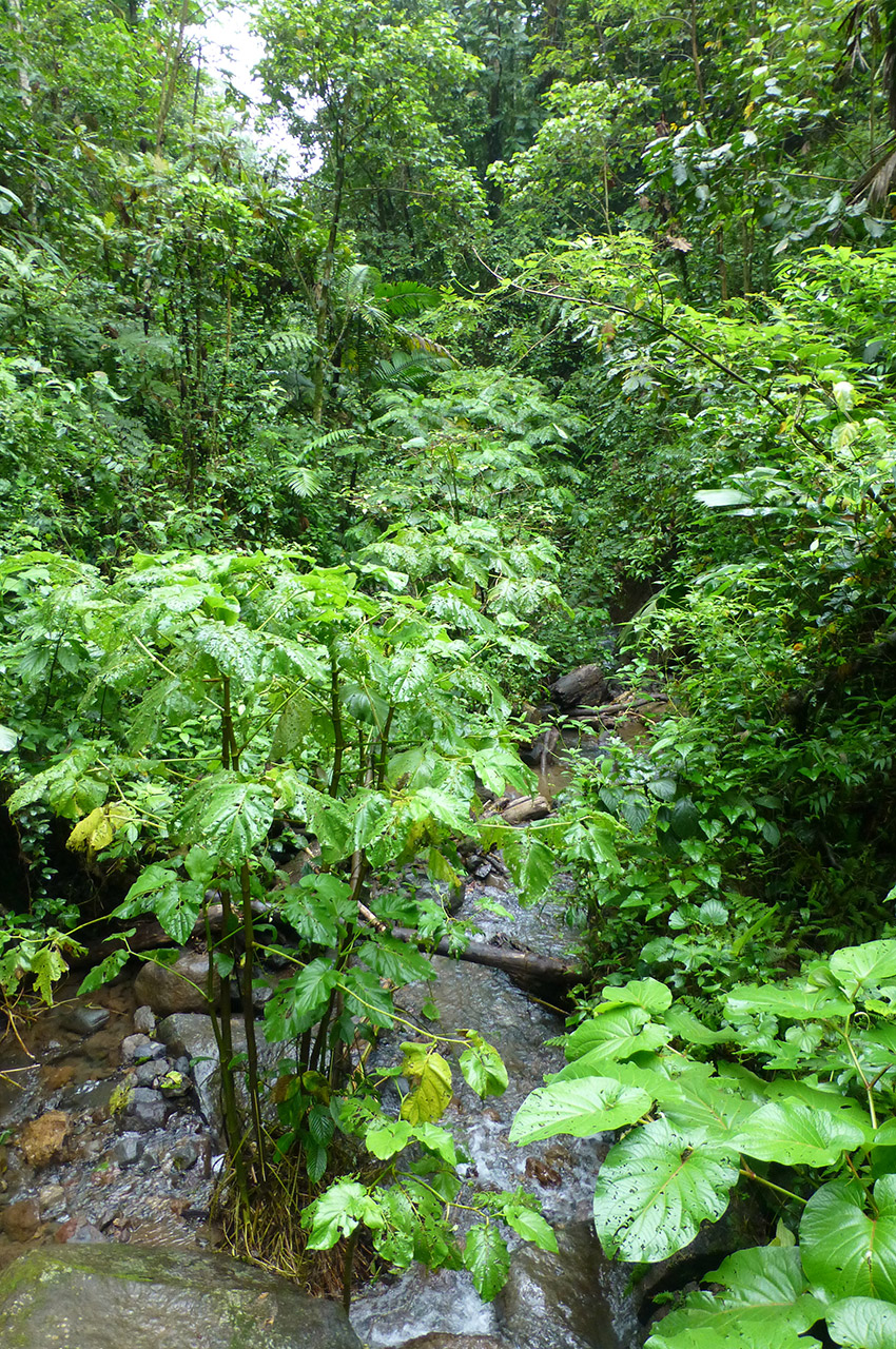 Plantes et arbres ont les racines dans l'eau