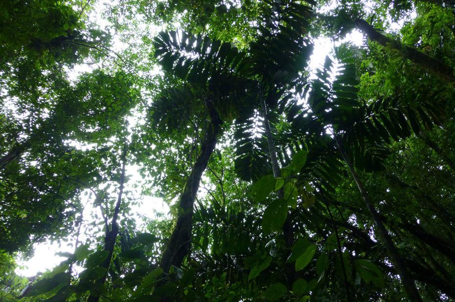 Des arbres de plusieurs dizaines de mètres de hauteur