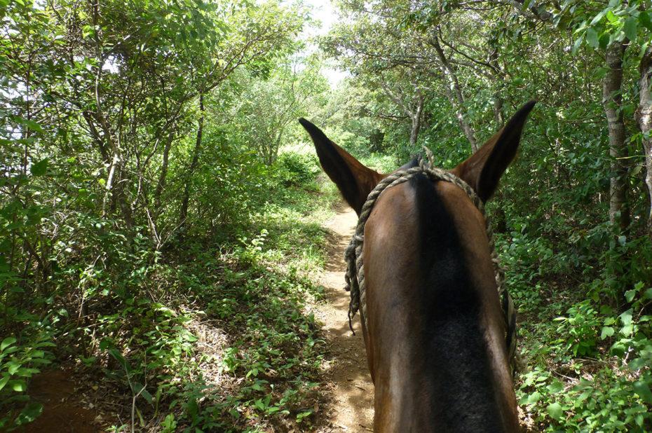 Balade de 2 heures à cheval