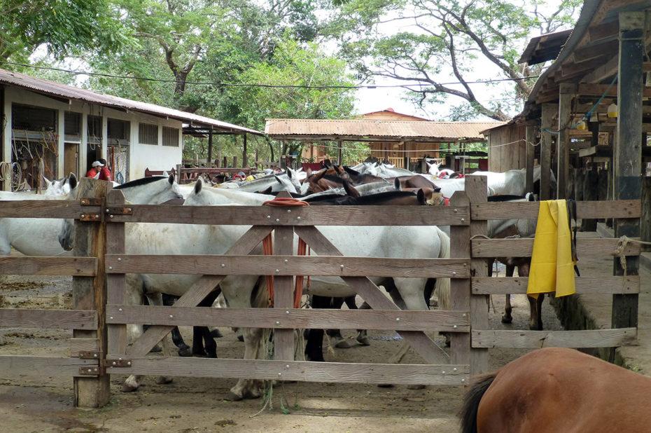De nombreux chevaux à la hacienda Guachipelin