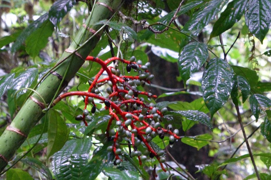 Une biodiversité incroyable dans la forêt humide