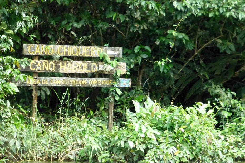 Plusieurs canaux pour visiter le Parc National de Tortuguero