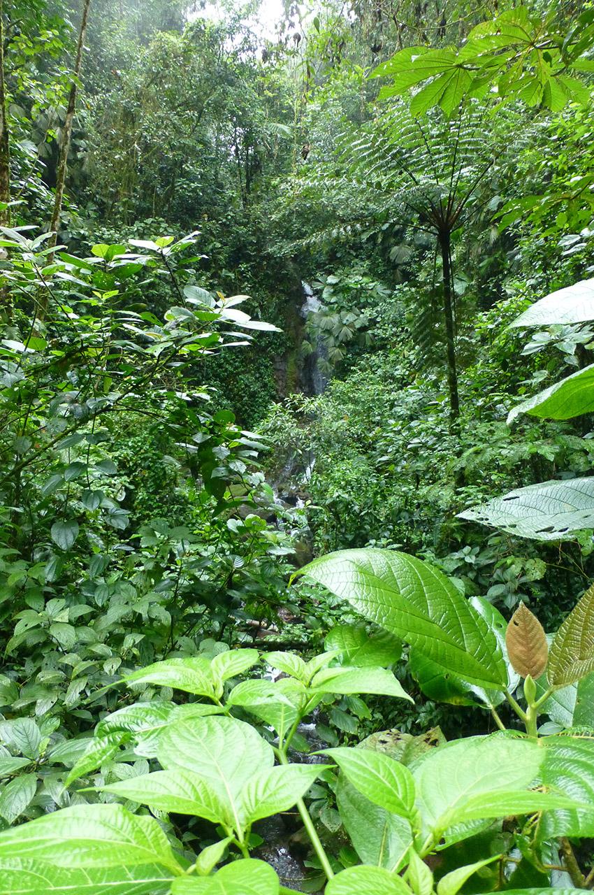 Petite cascade cachée par la végétation dense