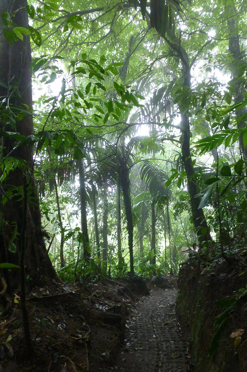 Le chemin serpente dans la forêt
