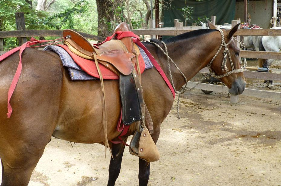 Un beau cheval pour une balade au pied du volcan