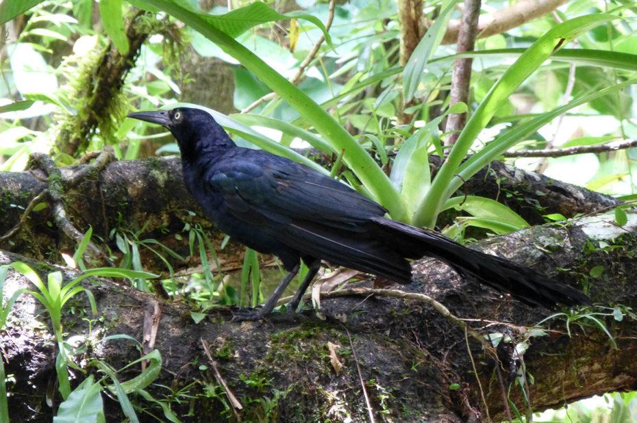 Un corbeau sur une branche d'arbre