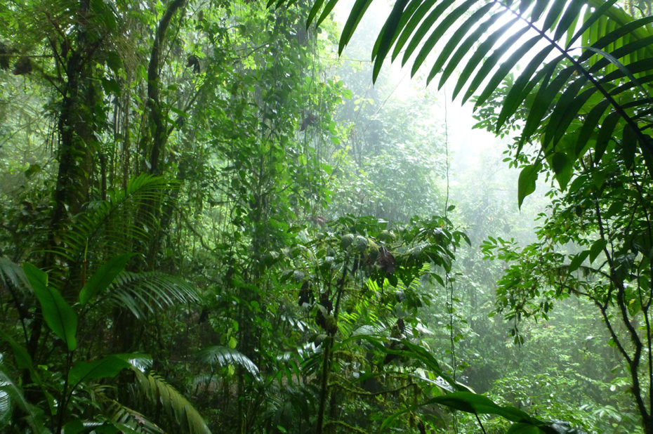 Un enchevêtrement incroyable de plantes et d'arbres