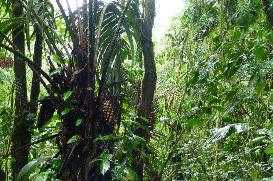 Des milliers d'espèces végétales prolifèrent