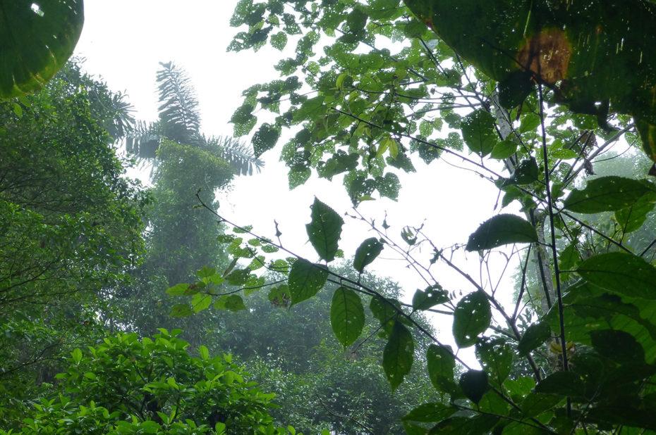 Les feuilles sont grignotées par de nombreux insectes