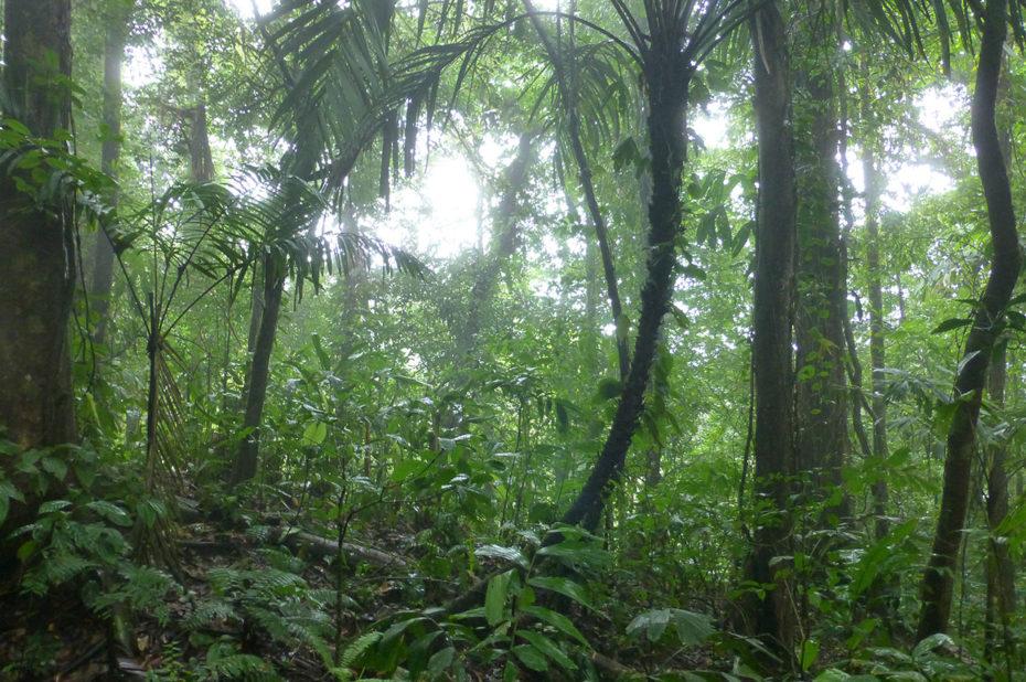 La forêt humide du Costa Rica