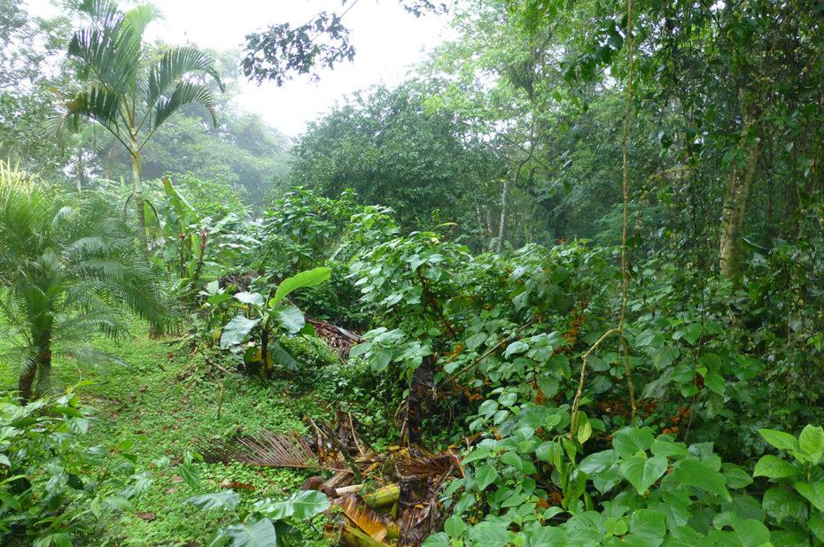 La forêt tropicale humide