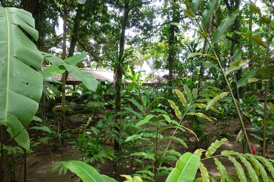 Les fougères dans la jungle derrière le Lodge