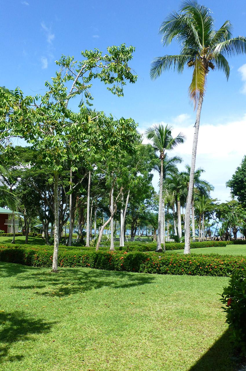 De grands palmiers dans le parc de l'hôtel