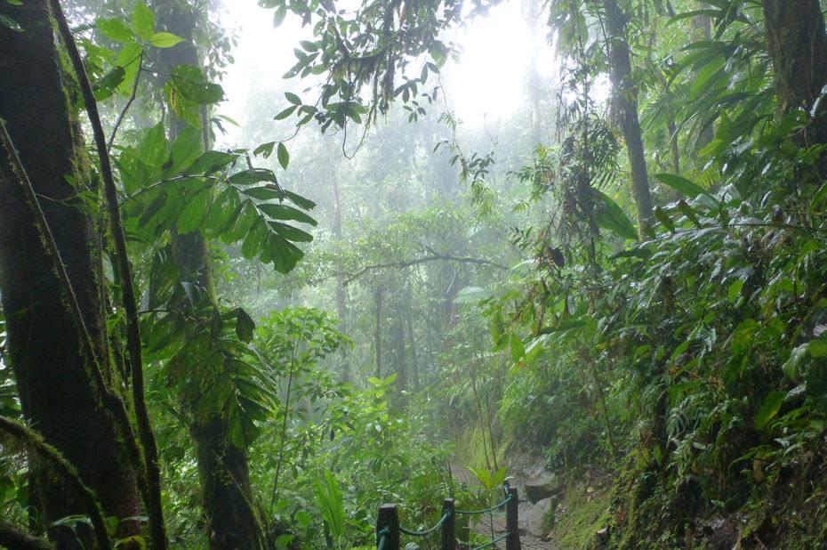 Une humidité proche de 100% dans la forêt tropicale