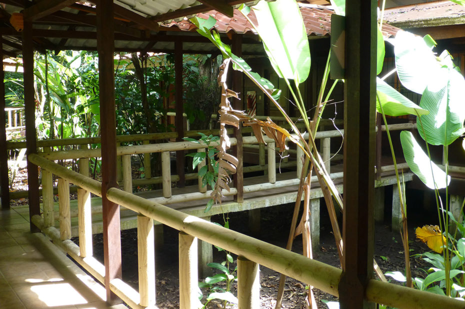 Un Lodge en pleine jungle