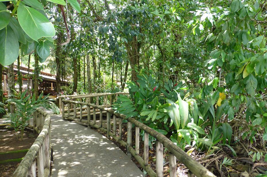 Une nature exubérante à Tortuguero