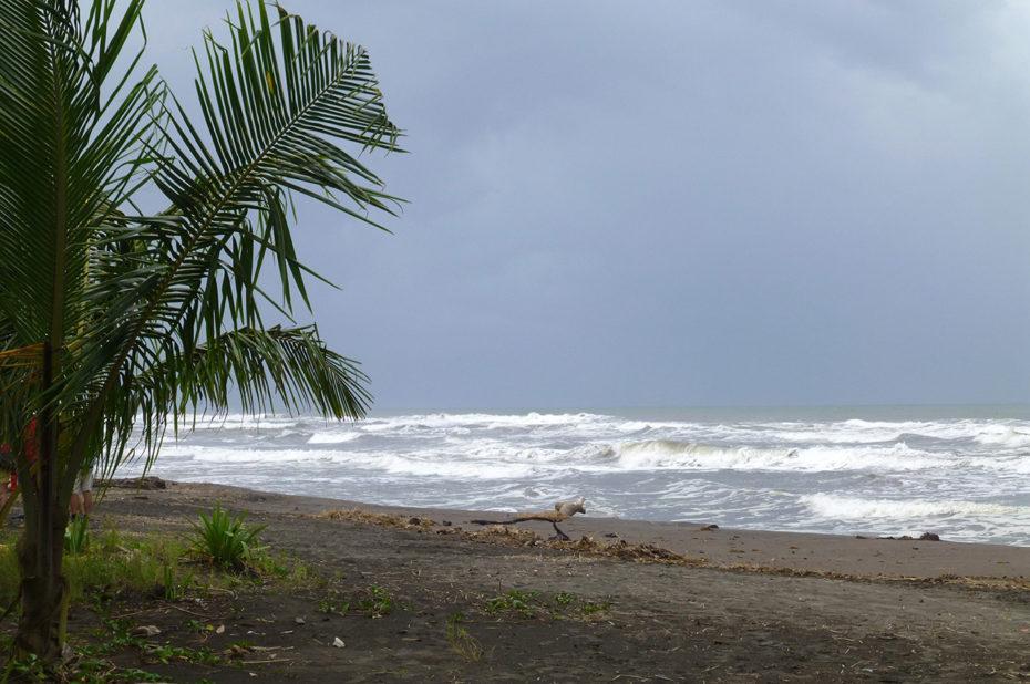 Palmier et plage de sable noir