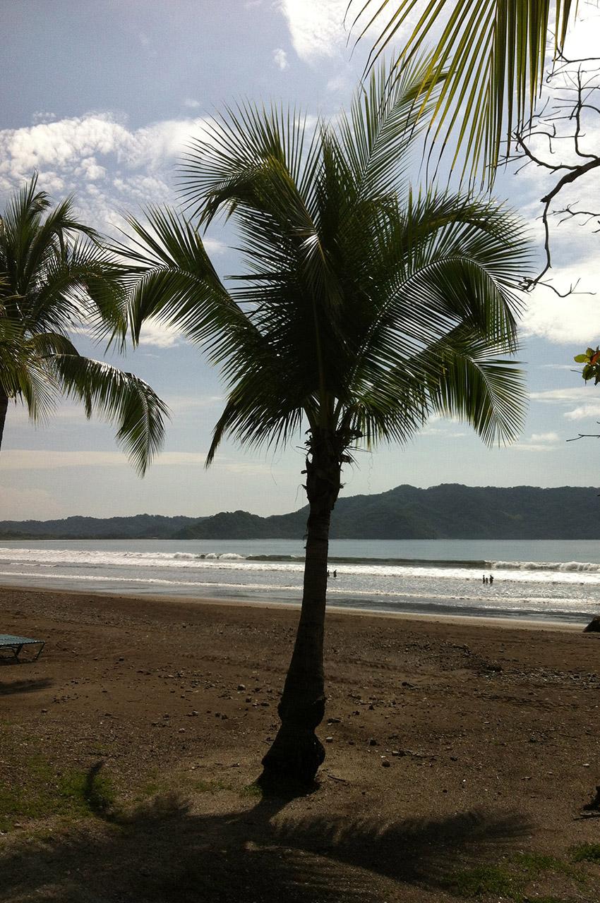 Palmiers sur la plage de sable gris