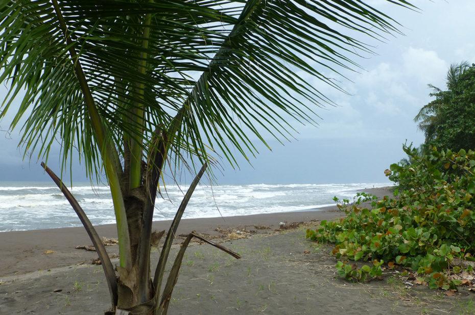 La plage de Tortuguero presque déserte