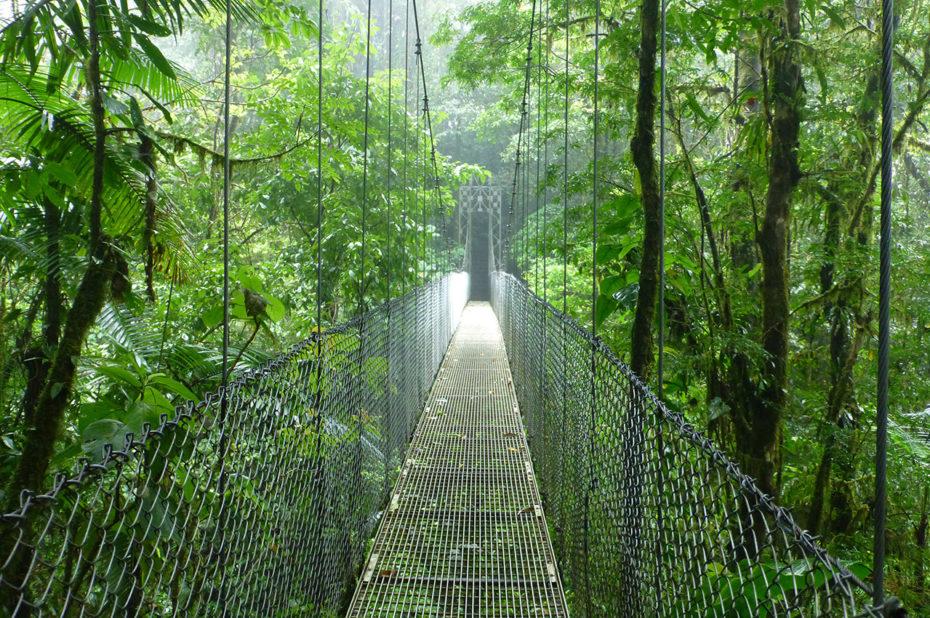 Des ponts suspendus pour découvrir les différents étages de la forêt