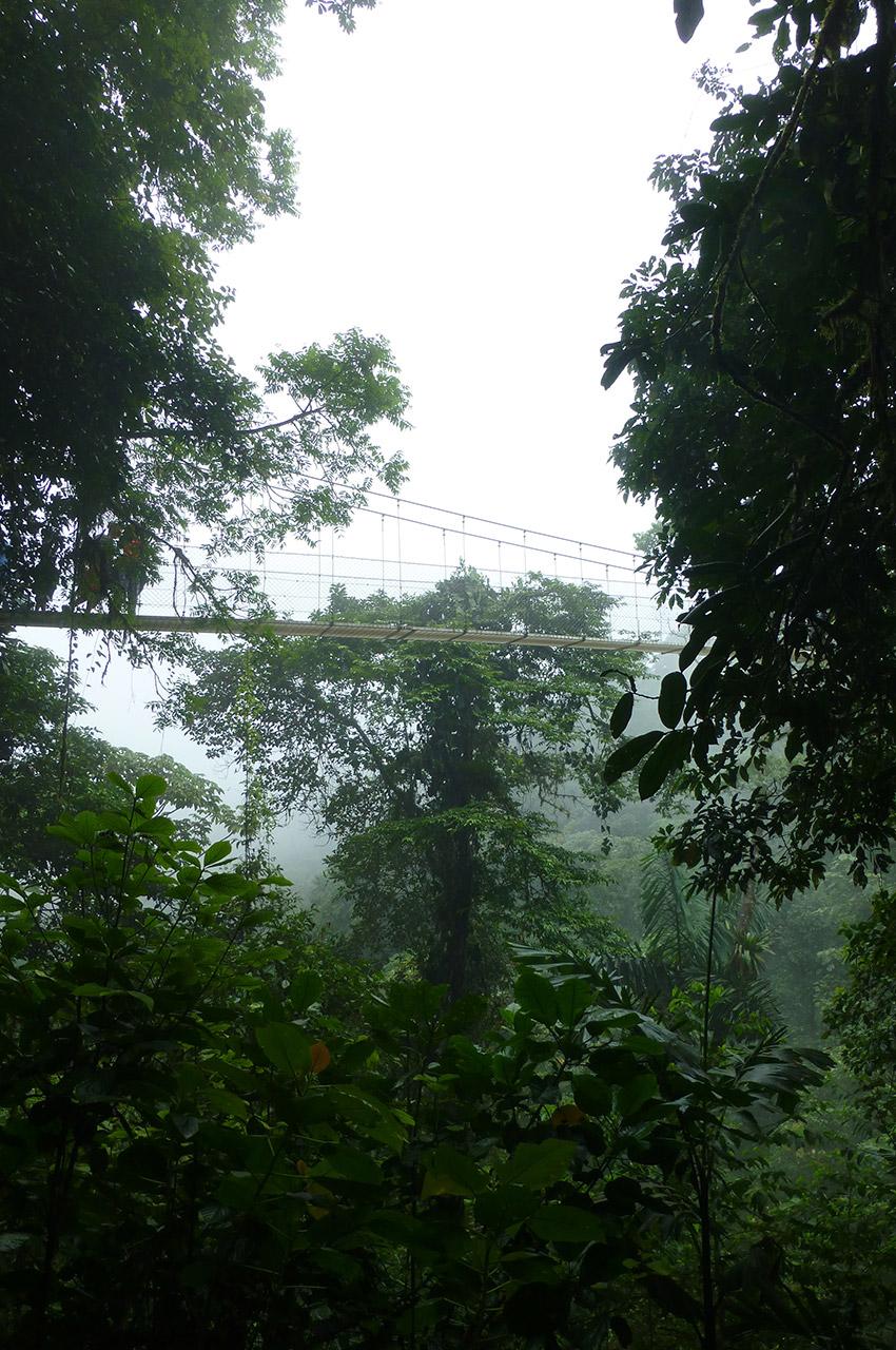 Un pont suspendu à plusieurs dizaines de mètres