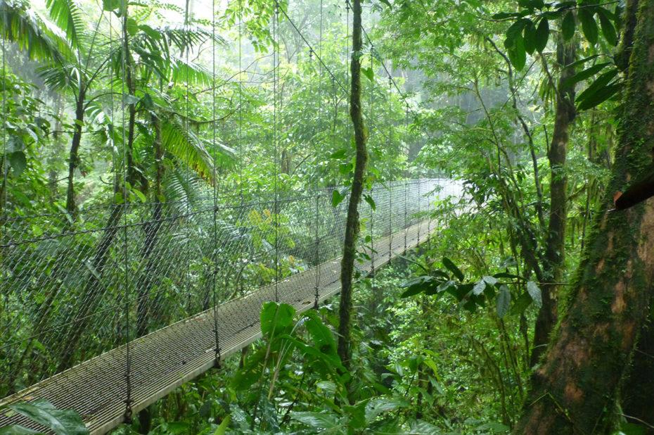 Un pont suspendu pour traverser la forêt