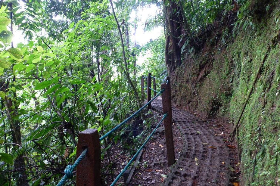 Sentier découverte serpentant dans la forêt
