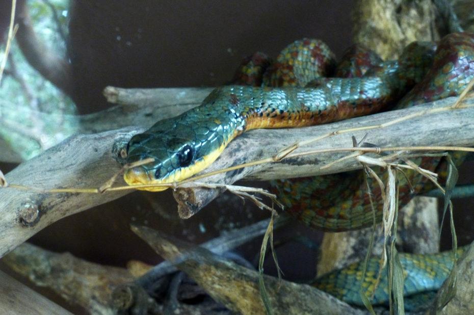 Un serpent dans un vivarium de l'hacienda