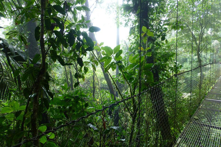 Sur un pont suspendu pour découvrir la canopée