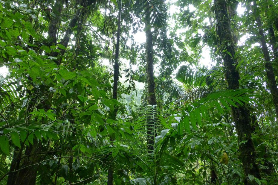 Un très grand nombre d'espèces de plantes et d'arbres