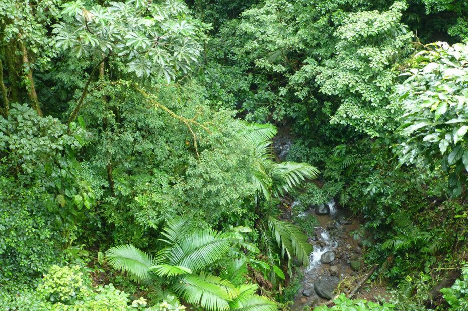 Vue sur la rivière depuis le sommet de la canopée
