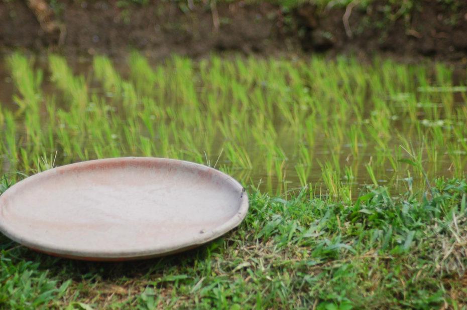 Assiette au bord d'une rizière