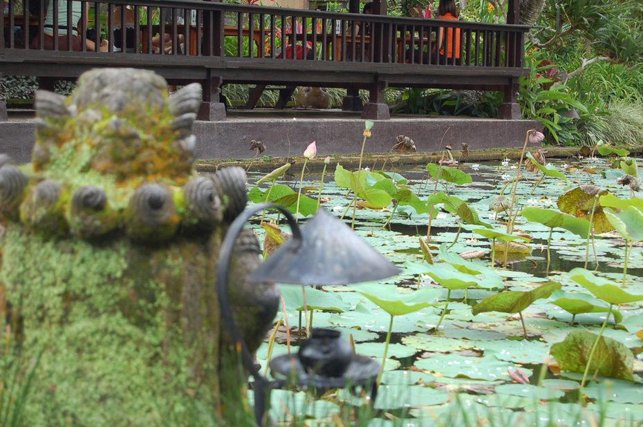 Un bassin aux nénuphars