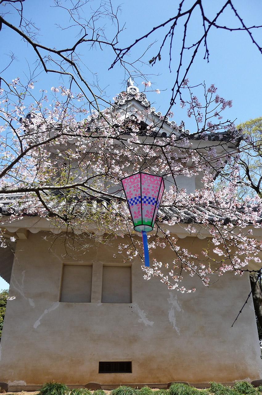 Cerisier dans le parc Kijo à Tsuchiura