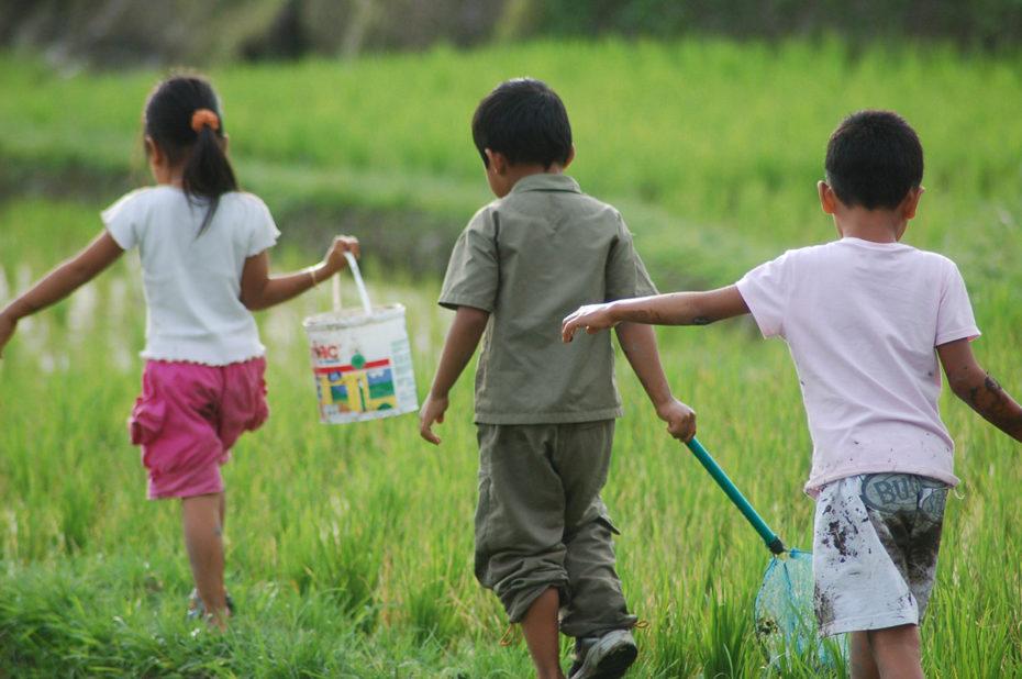 Enfants jouant dans les rizières