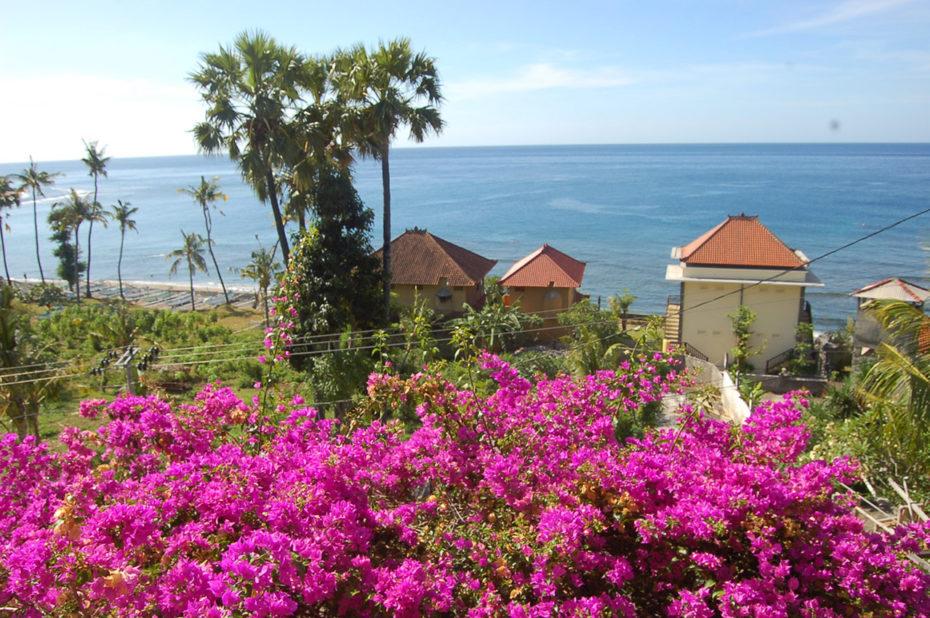 Fleurs roses et vue sur l'océan Indien