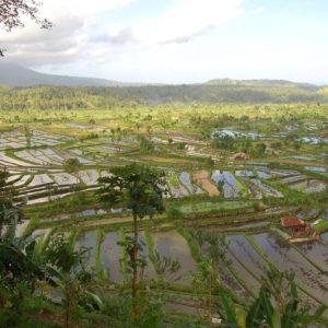 Paysage de rizières à perte de vue